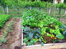 lgumes-dans-le-lit-augment-de-jardin-67954209