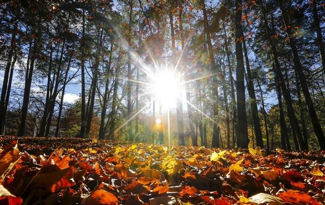 planes familiares en otoño - enriqueta regala bonito